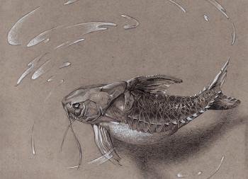 Bacu fish