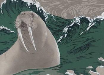 walrus drawing